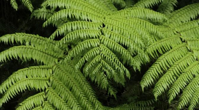 Biodiversità, la tutela passa dalla conoscenza