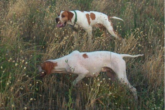 Collina di Saint Vincent  Area di addestramento cani o regalo pre elettorale?